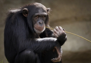 qualified solar appointments so easy, a monkey can do it